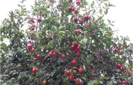 biodiversity-berries-440x280-c-default.jpg