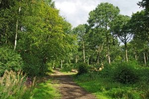 hadleigh great woods
