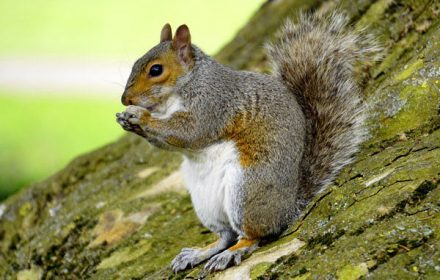 squirrel-440x280-c-default.jpg