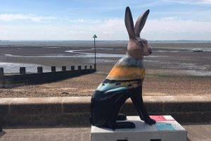 Hares Photo Comp